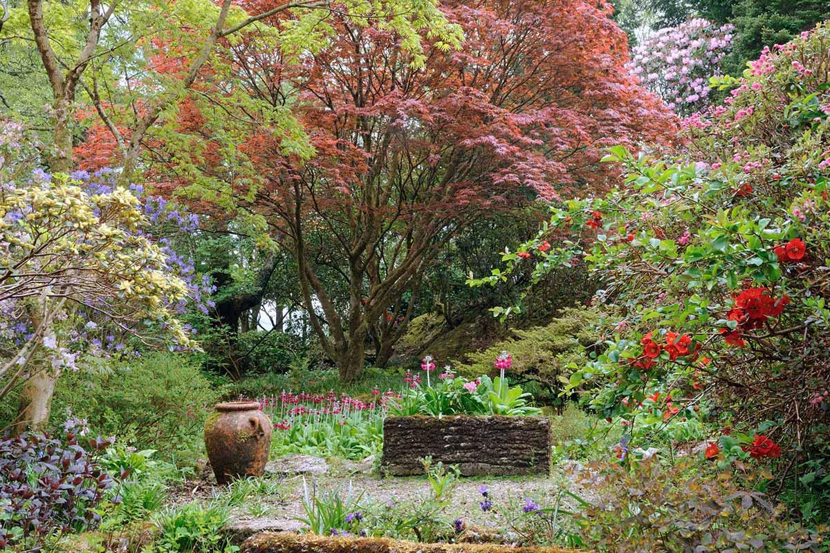 Ard Daraich - Fort William - A Glencoe Garden