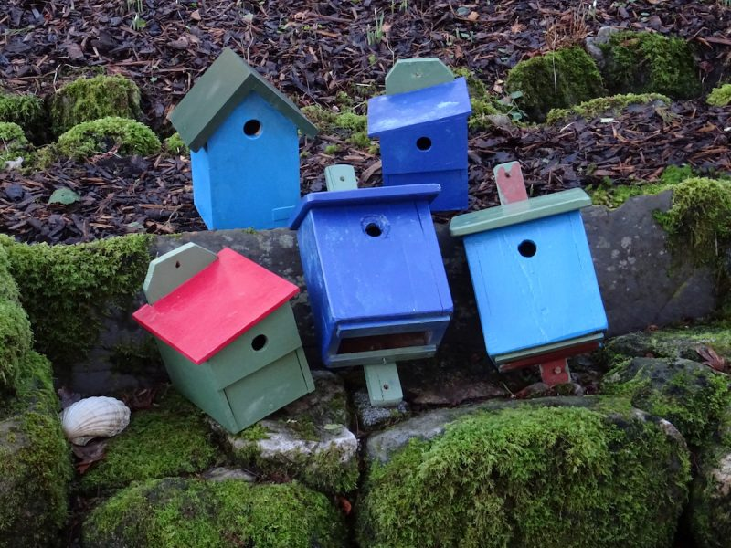 ard daraich self catering birdbox colourscheme